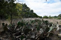 Cactus Plants at Hamilton Pool Preserve.jpg