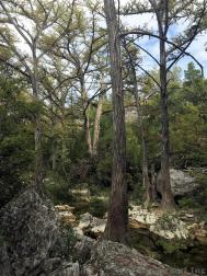 Trees in Hamilton Pool Preserve.jpg