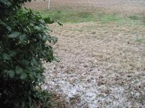 Snow on the ground in South Austin on February 23 2010.jpg